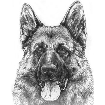 All About Mittelwest German Shepherds In Wonder Lake Illinois