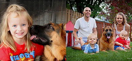 Mittelwest German Shepherds Are Amazing Family Dogs That Love Kids