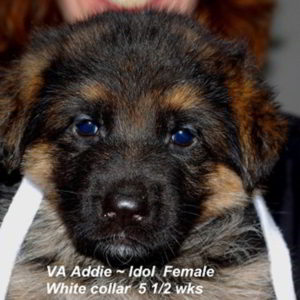 Breeing Female VA Addie vom Mittelwest - Progeny 113