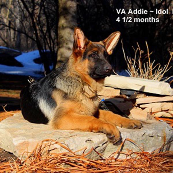 Breeing Female VA Addie vom Mittelwest - Progeny 128