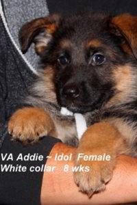 Breeing Female VA Addie vom Mittelwest - Progeny 44