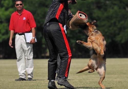 What Is Szhutzhund Training