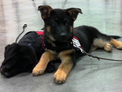 Custom Canines Seeing Eye Dog Academy 2