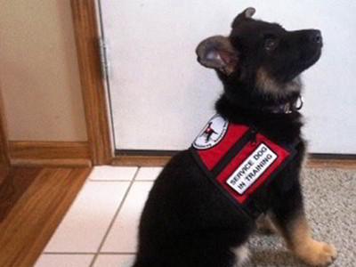 Custom Canines Seeing Eye Dog Academy 3