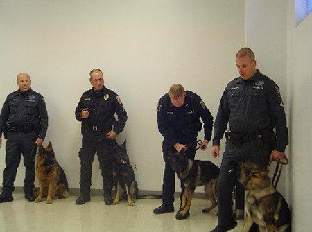 Mittelwest German Shepherds Narcotics Detection K-9 Dogs 2