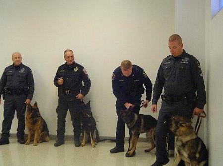 Mittelwest German Shepherds Narcotics Detection K-9 Dogs 2