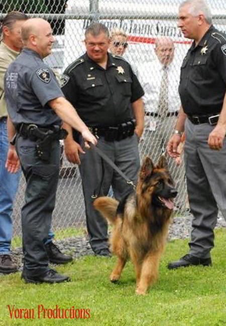 Mittelwest German Shepherds Narcotics Detection K-9 Dogs 4