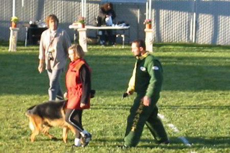 Ring Sport At Mittelwest German Shepherds 2