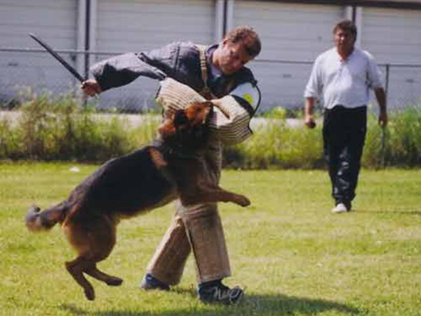 Schutzhund Training At Its Finest With Mittelwest German Shepherds 3