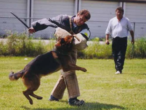 Schutzhund Training At Its Finest With Mittelwest German Shepherds 3