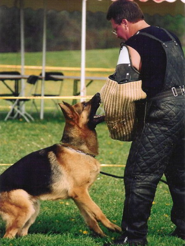 Schutzhund Training At Its Finest With Mittelwest German Shepherds 4