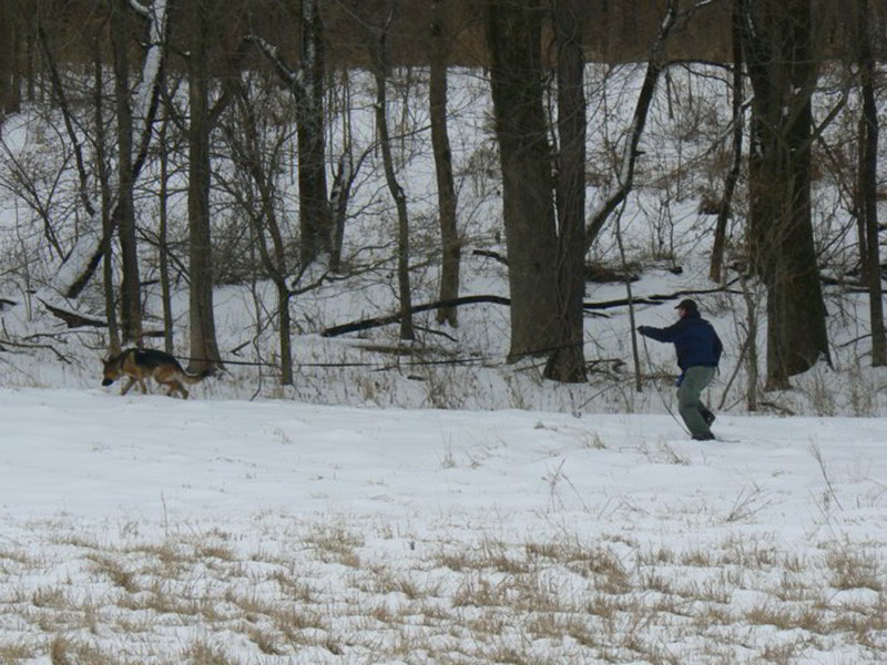 The Advanced Tracking Dogs Of Mittelwest German Shepherds