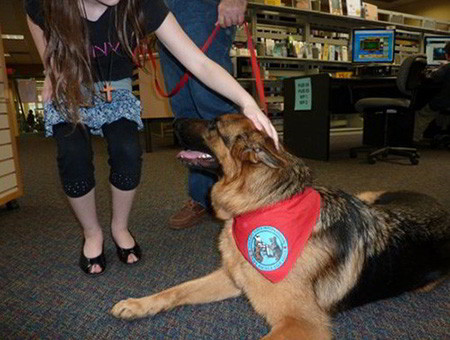 The Amazing Therapy Dogs Of Mittelwest German Shepherds 1
