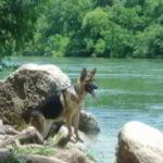 Mittelwest German Shepherds Client Testimonial From Barbara Boyle