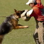 Mittelwest German Shepherds Client Testimonial From Kelly Grim