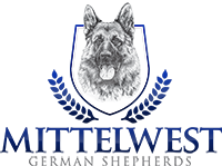 Mittelwest German Shepherds – The Finest German Shepherds In The World!
