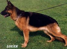 Mittelwest's Retired Breeding Females - Maxi vom Mittelwest