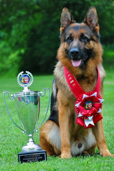 Champion Stud - VA Odin vom Mittelwest 14
