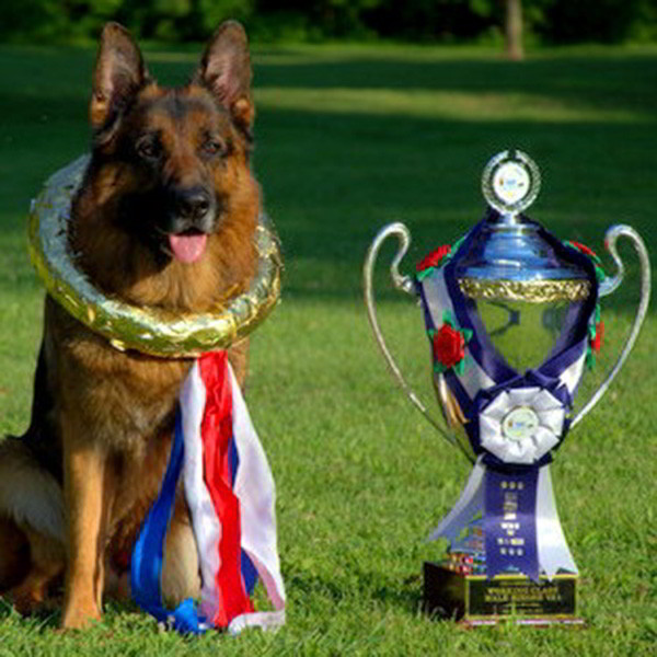 Champion Stud - VA Odin vom Mittelwest 16