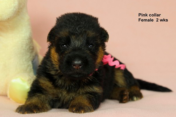 Breeing Female Sochi vom Mittelwest - Progeny 6