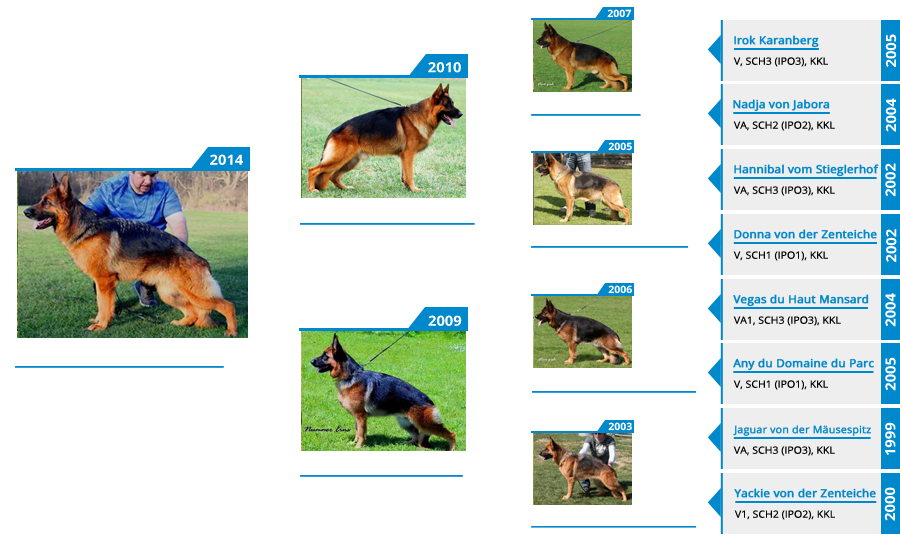 Breeding Females - V1 Brienne vom Mittelwest - Pedigree