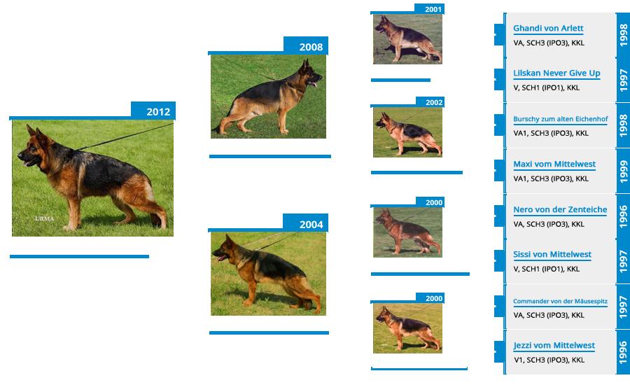 Breeding Females - V Gracie vom Mittelwest - Pedigree