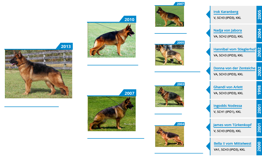 Breeding Females - V Sochi vom Mittelwest - Pedigree