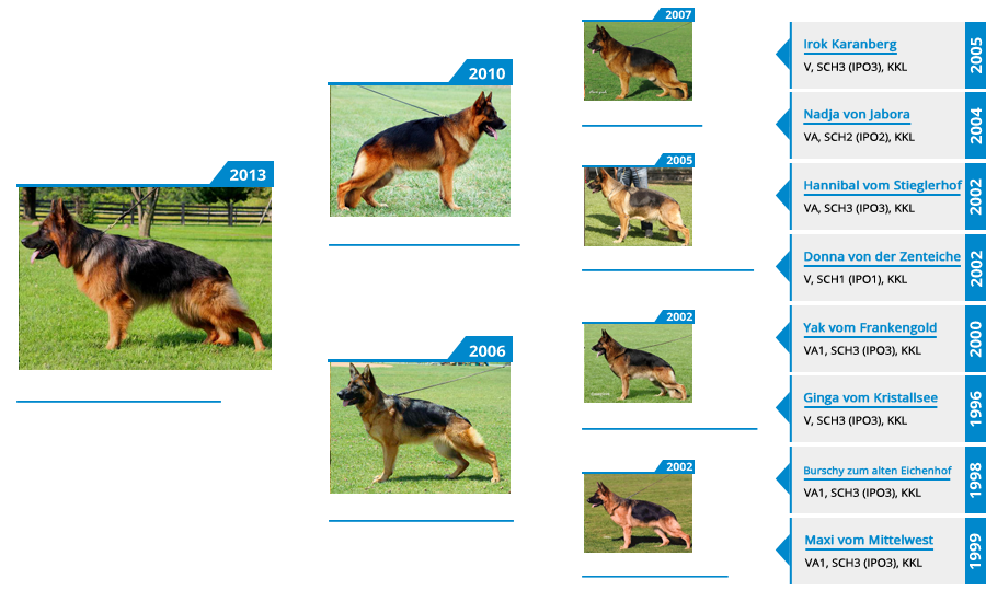 Breeding Females - V1 Yoshi vom Mittelwest - Pedigree