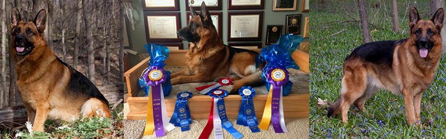Client Testimonials Of Mittelwest German Shepherds Bev Mills