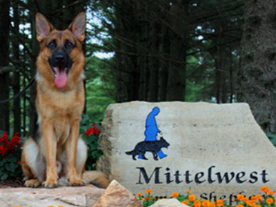 Client Testimonials Of Mittelwest German Shepherds Chris & Axsel