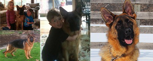 Client Testimonials Of Mittelwest German Shepherds Dave Sousa