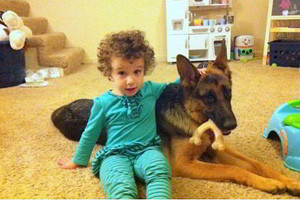 Client Testimonials Of Mittelwest German Shepherds Haddie & Riley