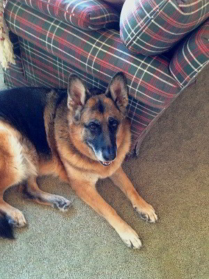 Client Testimonials Of Mittelwest German Shepherds Mike Dorfman