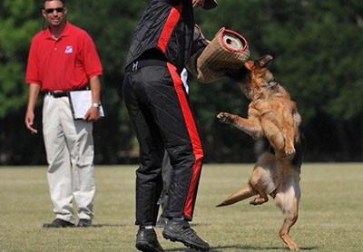 The BEST Schutzhund Training Is At Mittelwest