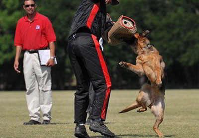 The BEST Schutzhund Training Is At Mittelwest