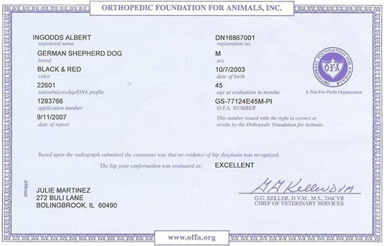 Retired Stud Ingodd's Albert Hip Certificate