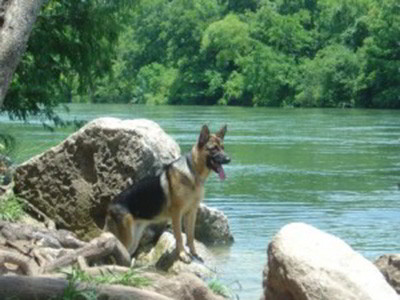 Client Testimonials Of Mittelwest German Shepherds Barbara Doyle