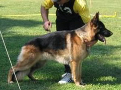 Client Testimonials Of Mittelwest German Shepherds Gary & Kalen
