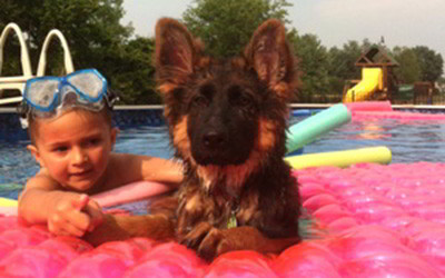 Client Testimonials Of Mittelwest German Shepherds Sulkowski Family