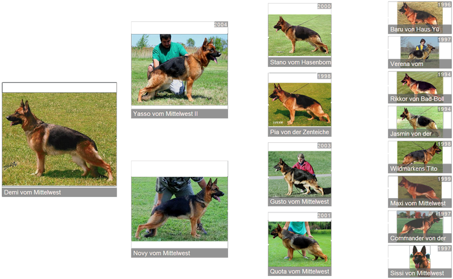 Pedigree For Retired Breeding Female - V Demi vom Mittelwest