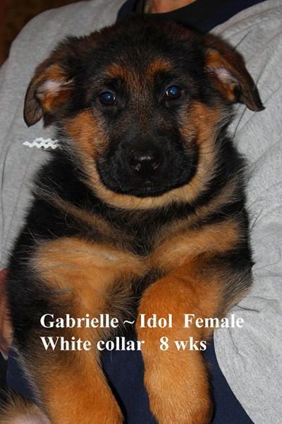 Retired Breeing Female V1 Gabrielle vom Mittelwest - Progeny 17