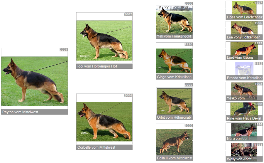 Retired Breeding Female V Peyton vom Mittelwest - Pedigree