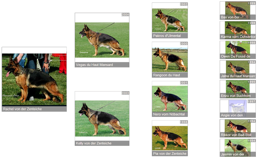 Pedigree For Retired Breeding Female - Rachel von der Zenteiche Pedigree