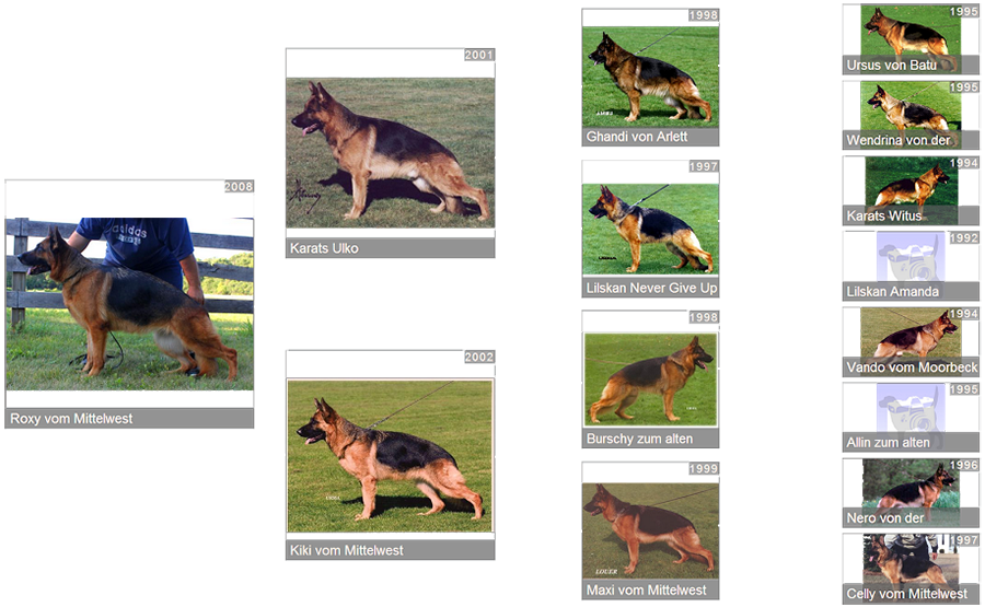 Retired Breeding Female V1 Roxy vom Mittelwest - Pedigree