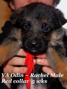 Retired Breeding Females Rachel von der Zenteiche - Progeny 12