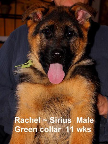 Retired Breeding Females Rachel von der Zenteiche - Progeny 22