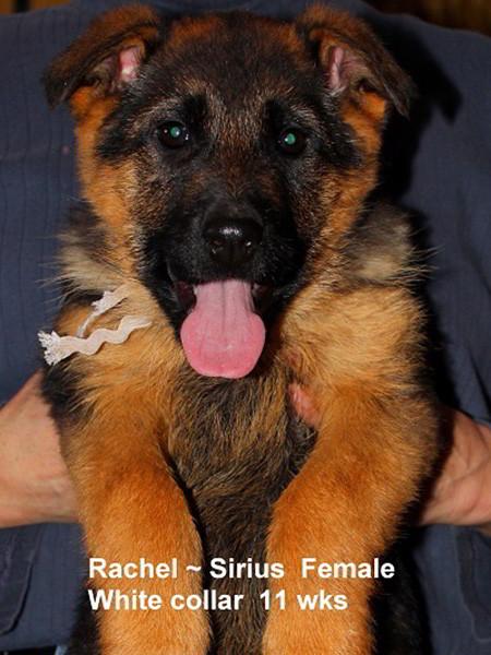 Retired Breeding Females Rachel von der Zenteiche - Progeny 24