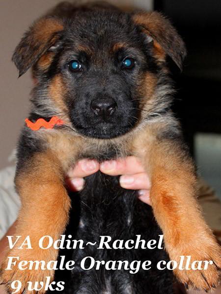 Retired Breeding Females Rachel von der Zenteiche - Progeny 37