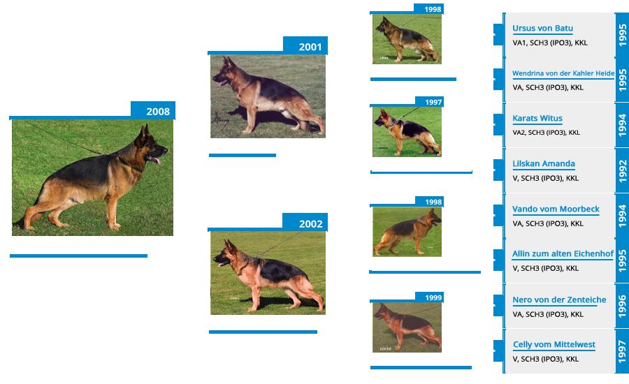 Stud Dog VA1 Rocco vom Mittelwest - Pedigree