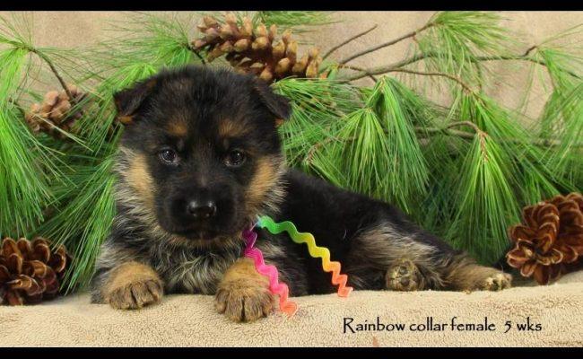 Coby-5-Rainbow